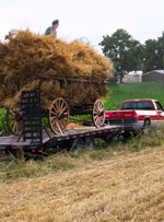 Rye Harvest, The Pennsylvania German Garden at the Henry Antes House, Perkiomenville PA, Goschenhoppen Folk Festival